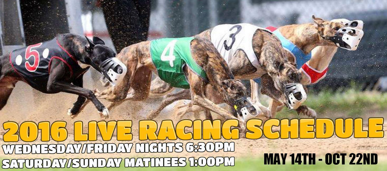 Greyhound Racing Betting -533274