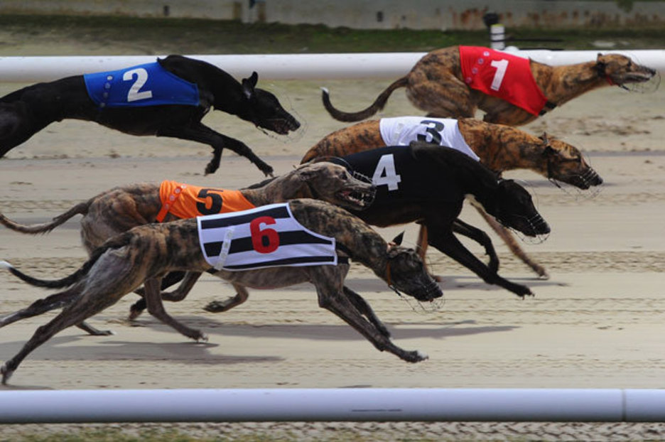 Greyhound Racing Betting -996068